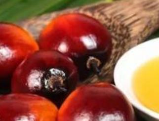 棕榈油期货交易指南:企业如何利用棕榈油衍生品工具
