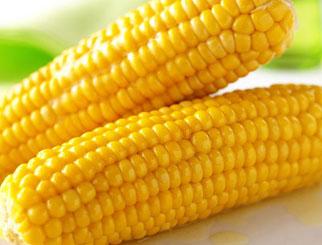 """""""三拍""""全部溢价成交 玉米成市场""""宠儿""""?"""