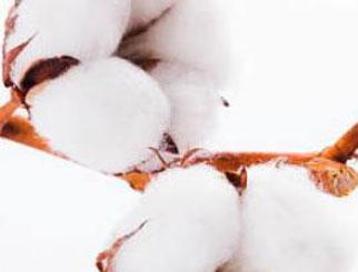 """《农产品期货》:""""白金""""之花满枝绽——棉花的价格影响因素"""