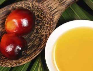 """棕榈油期货""""提速""""国际化 业界盼提升价格影响力"""