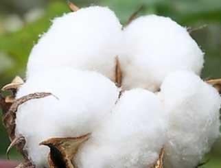 棉花期货基本面分析