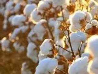 棉花期货怎么开户?