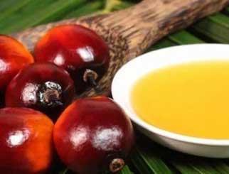 棕榈油进入增产周期,关注反弹做空机会
