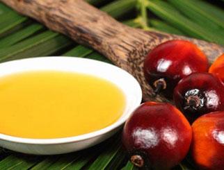 棕榈油期货国际化平稳起步