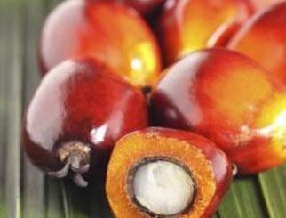 大商所棕榈油期货国际化今日起航