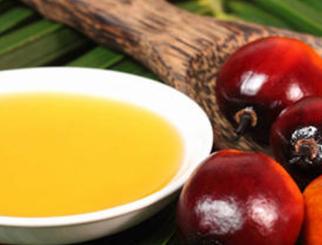 棕榈油期货交易指南:棕榈油衍生品工具介绍