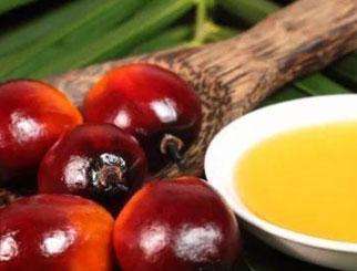 我国棕榈油期货正式引入境外交易者